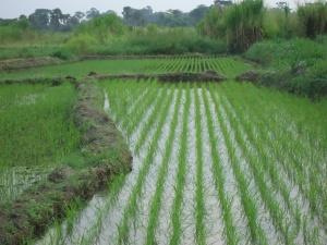 15 une parcelle bien planée permet de controler une grande partie des herbes